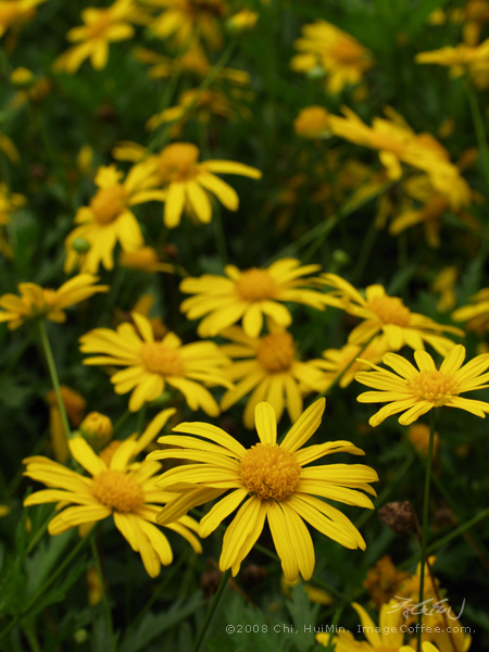 Yellow Garden Flowers