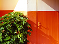 The orange wall / Le mur orange / 橙牆